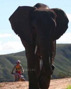 sauser_elephant